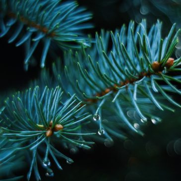 Un albero di Natale da decorare per 230 bimbi!