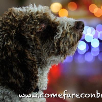 Il mio cane Bieco che controlla che tutto vada per il meglio